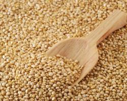 Kvinojina rižota z olimskim sirom